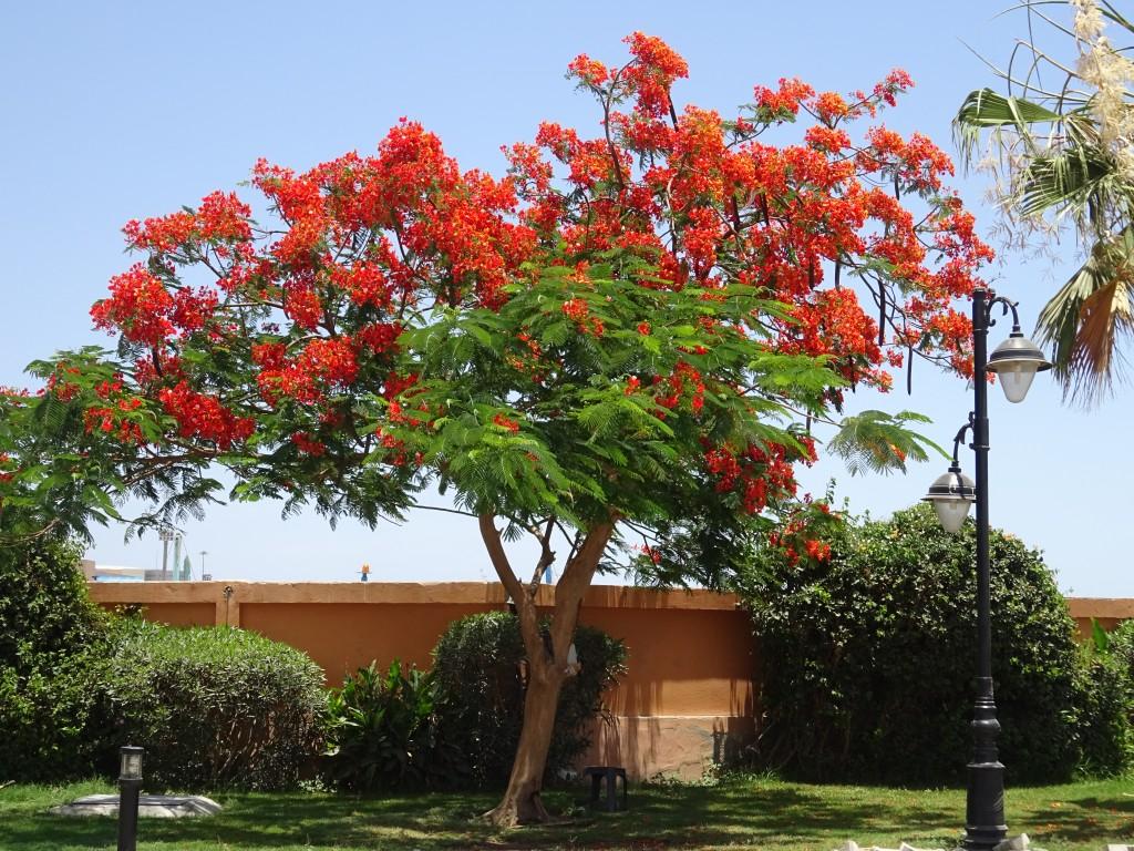 Hurghada 023