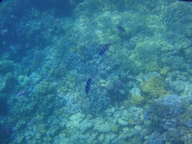 Hurghada 035