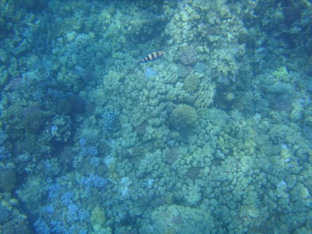 Hurghada 038