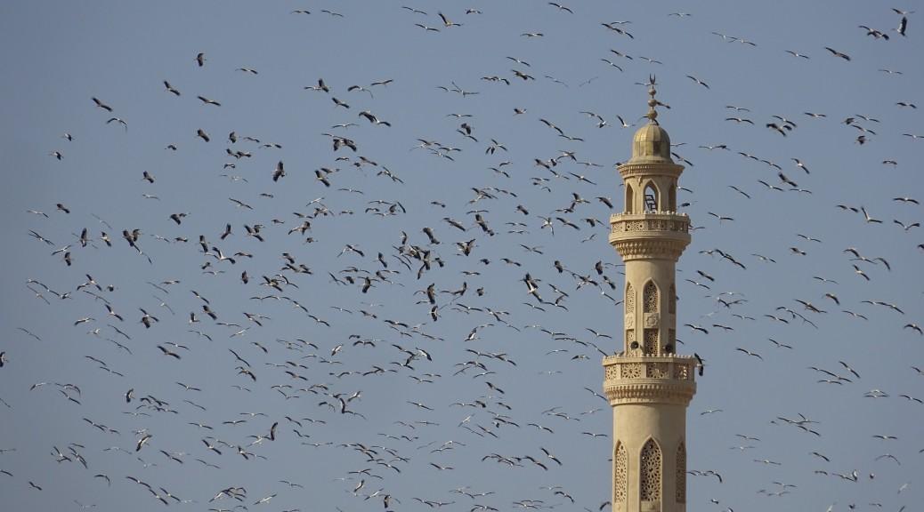 Hurghada, Storchenzug 020