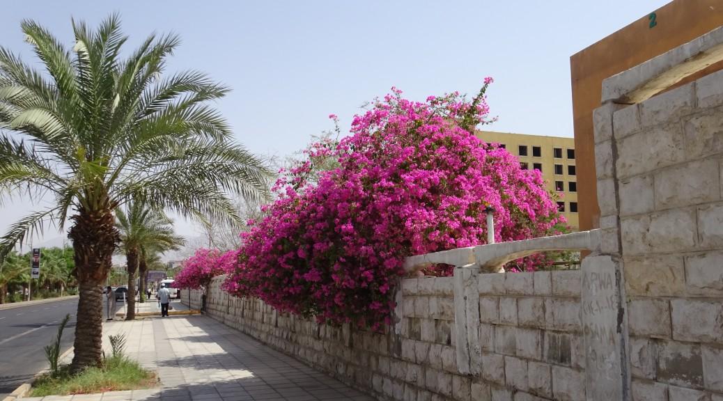 Aqaba 006