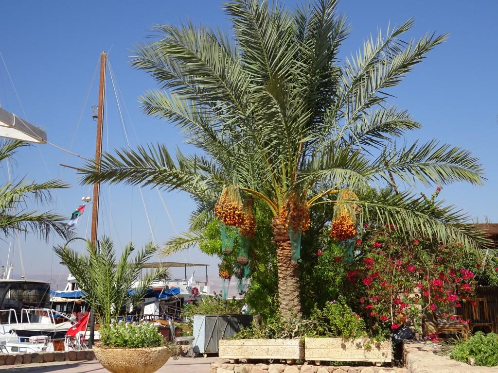 Aqaba 013