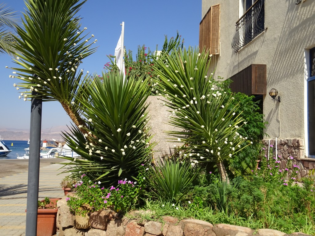 Aqaba 016
