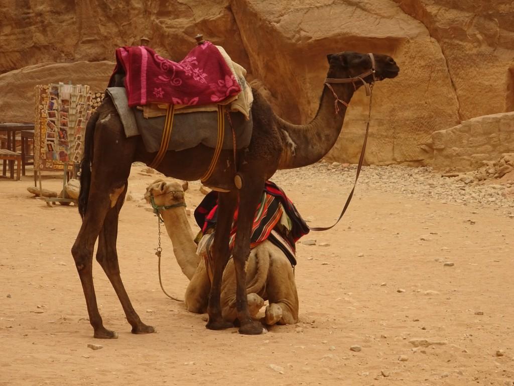 Aqaba, Petra und Wüstenstaub 084