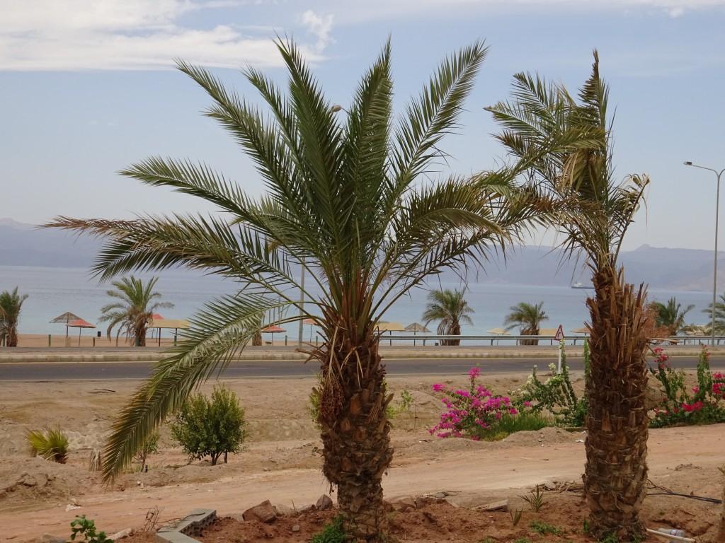 Aqaba mit Südstrand 014