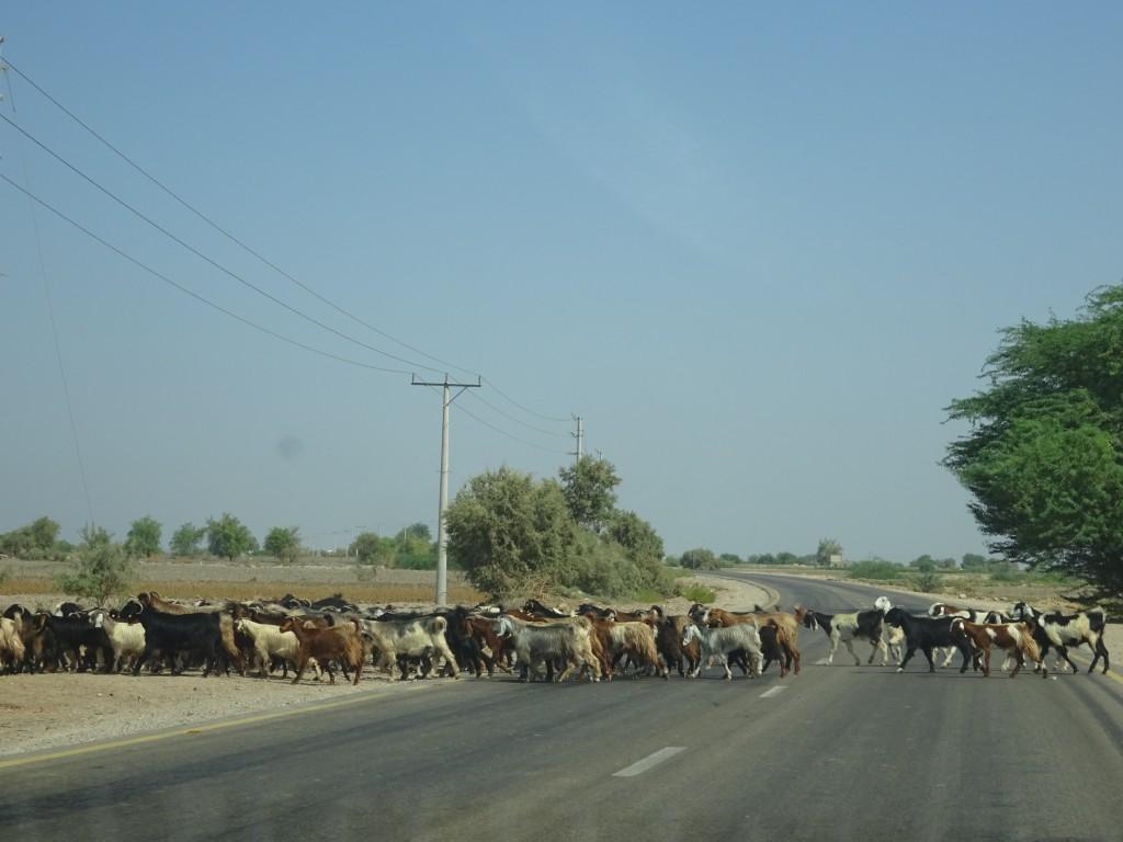 Fahrt nach Amman und die Stadt 016
