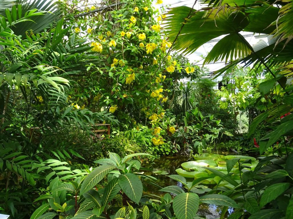 Regenwaldpflanze